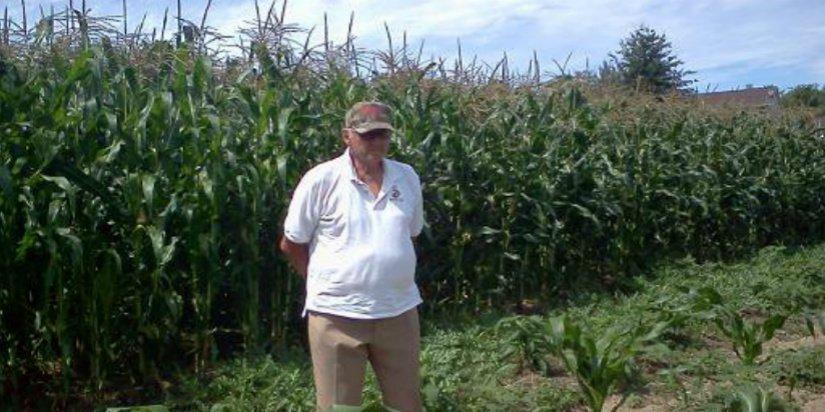 organic grown corn