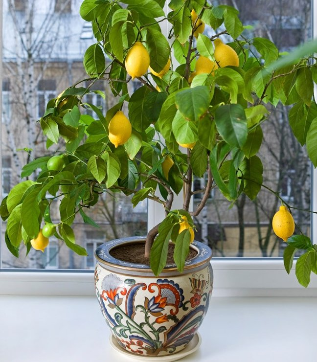 grow indoor organic fruit