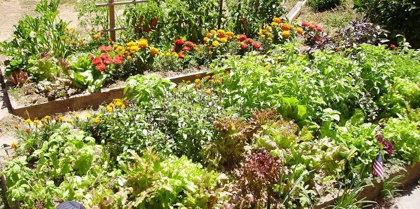 5 ways to improve your backyard