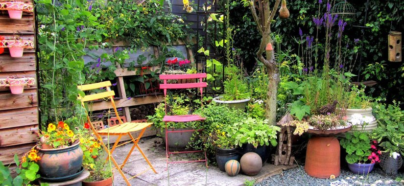 Choosing the right plants for your garden