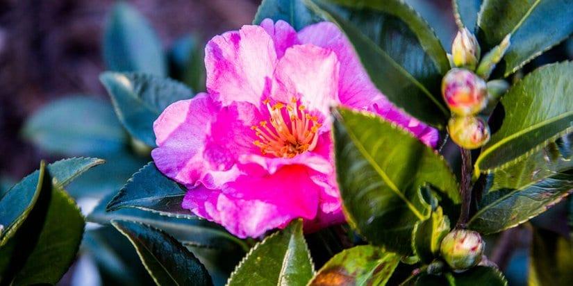 Tips For Creating A Secret Garden This Summer