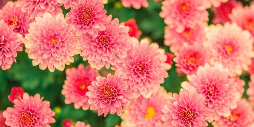 Simple ways to make a wonderful flower garden