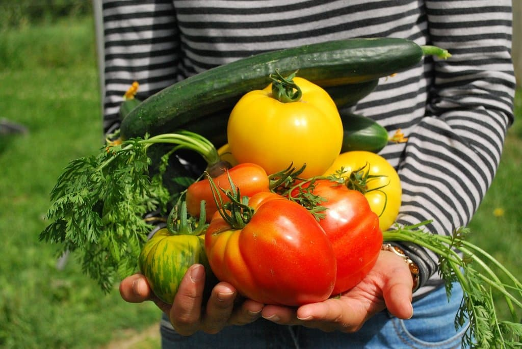 Simple tips on making a vegetable garden
