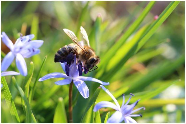 eco-friendly-garden-decor-2