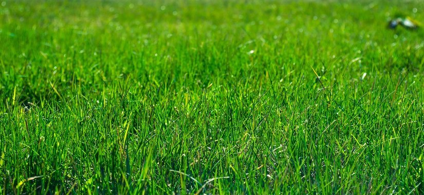 Well kept lawn maintenance and care