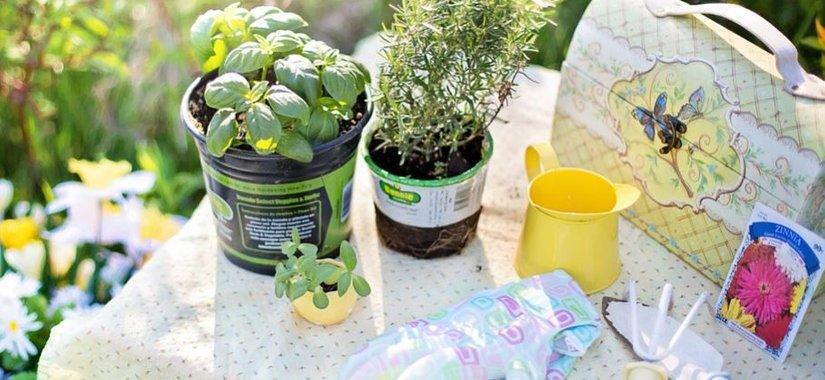 Top garden design ideas