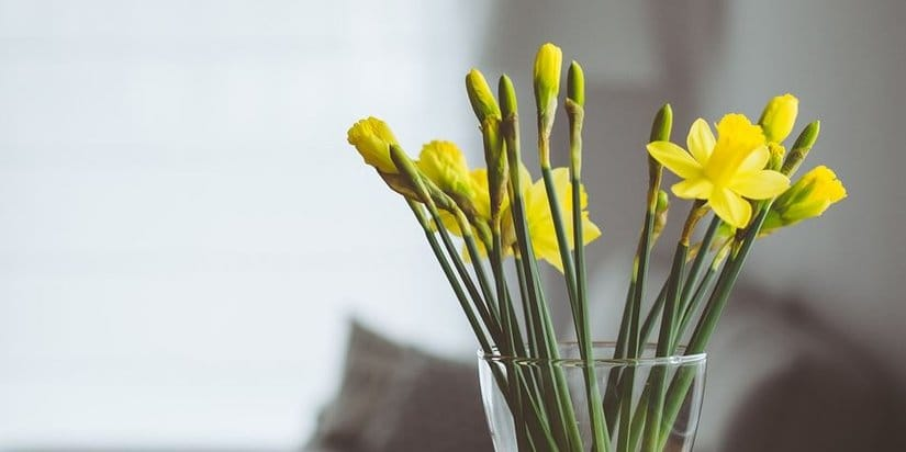 Love Plants But Hate Gardening? Bring Some of the Outdoors Inside