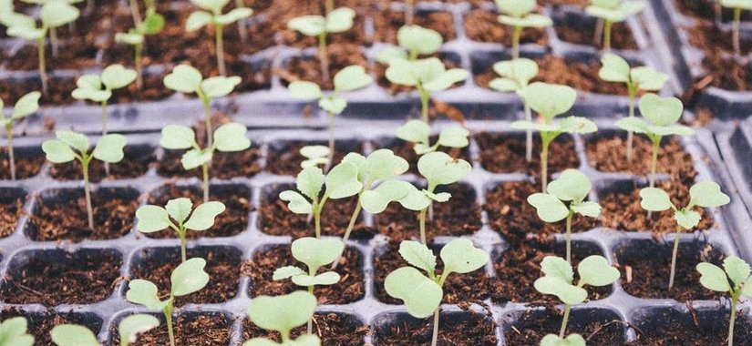Getting To The Root Of Square-Foot Gardening